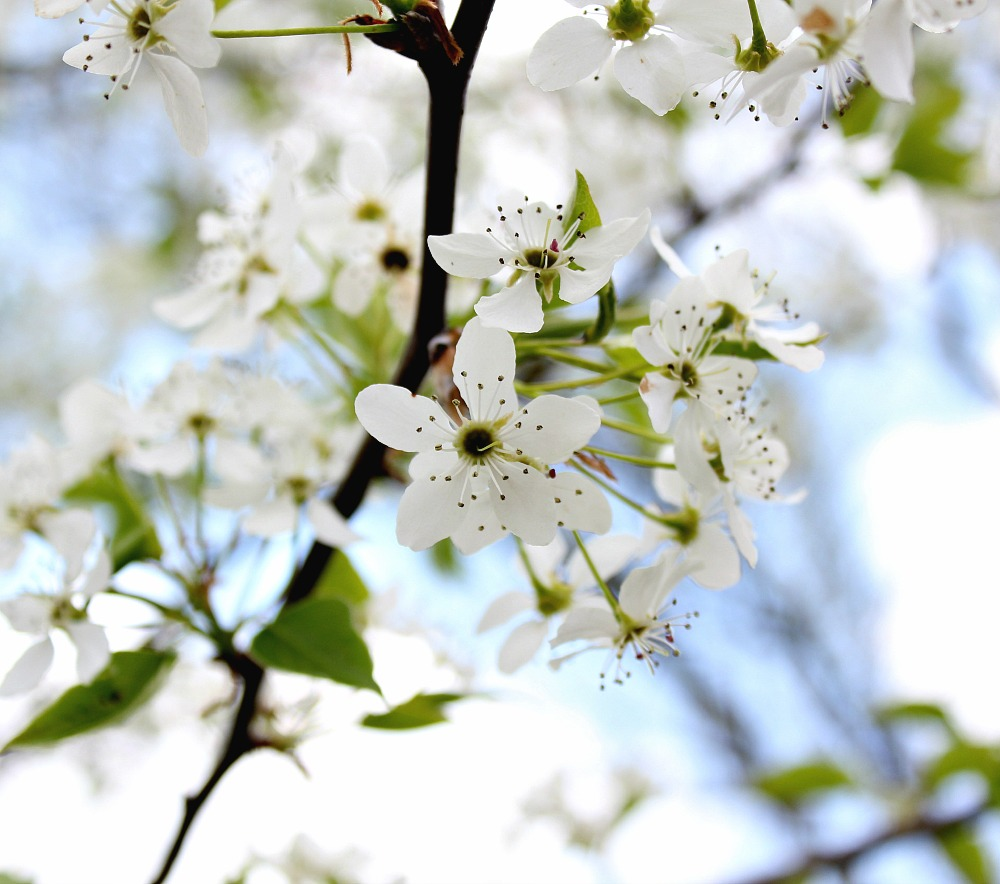 the sweetness of spring