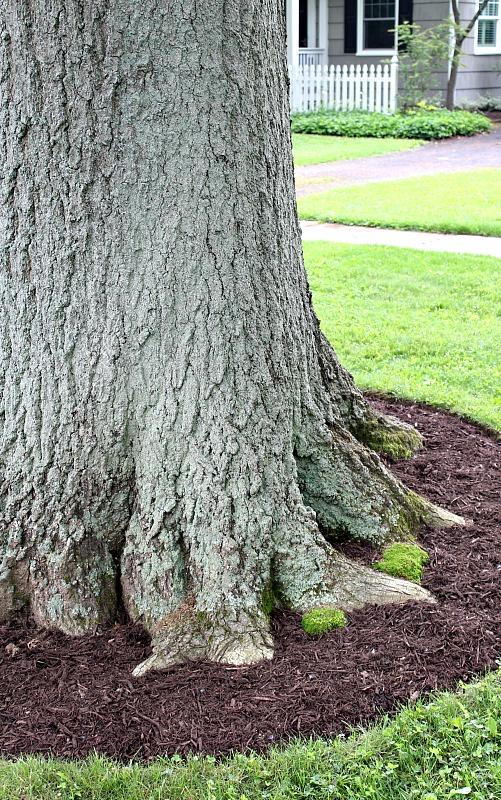 oaks2